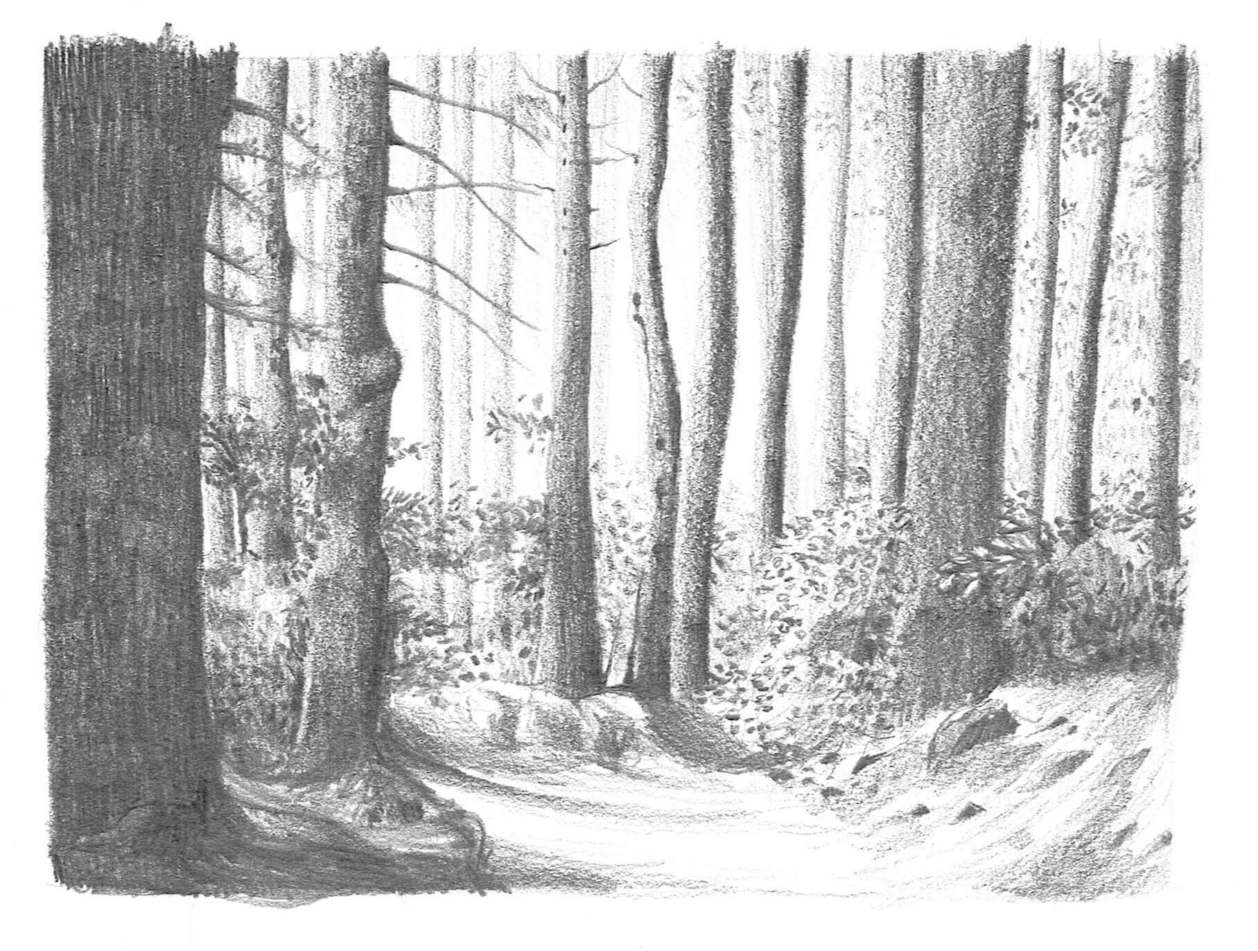 Forêt crayonnée